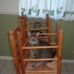 The Cat-lympics