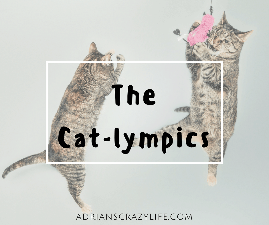 During this Olympic season, my cute kitties wanted to get in on the fun with the Cat-lympics