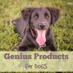 Genius Products – For DOGS