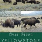 Our First-time Trip to Yellowstone