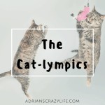 The Cat-lympics – A fun Olympic Event for Cats
