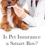 Is Pet Insurance a Smart Buy?