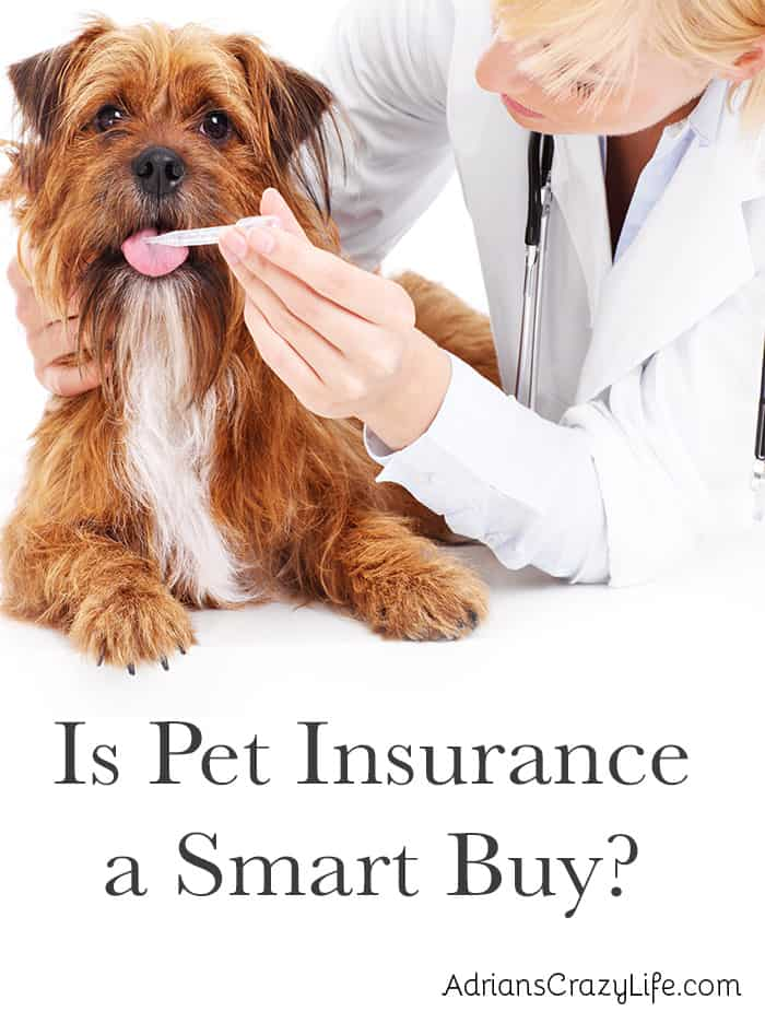 Is Pet Insurance a Good Buy? #AdriansCrazyLife Should you purchase pet insurance for your pet's medical bills? Maybe yes, maybe no.