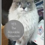 Yeti the Adorable Snowman