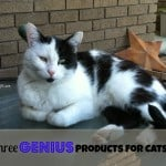 Three GENIUS Products for Cats