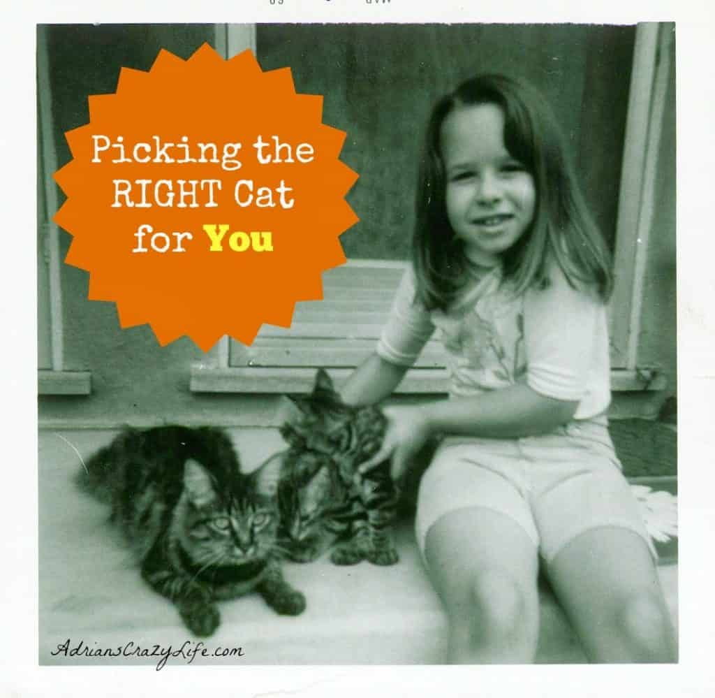Picking the RIGHT Cat for YOU