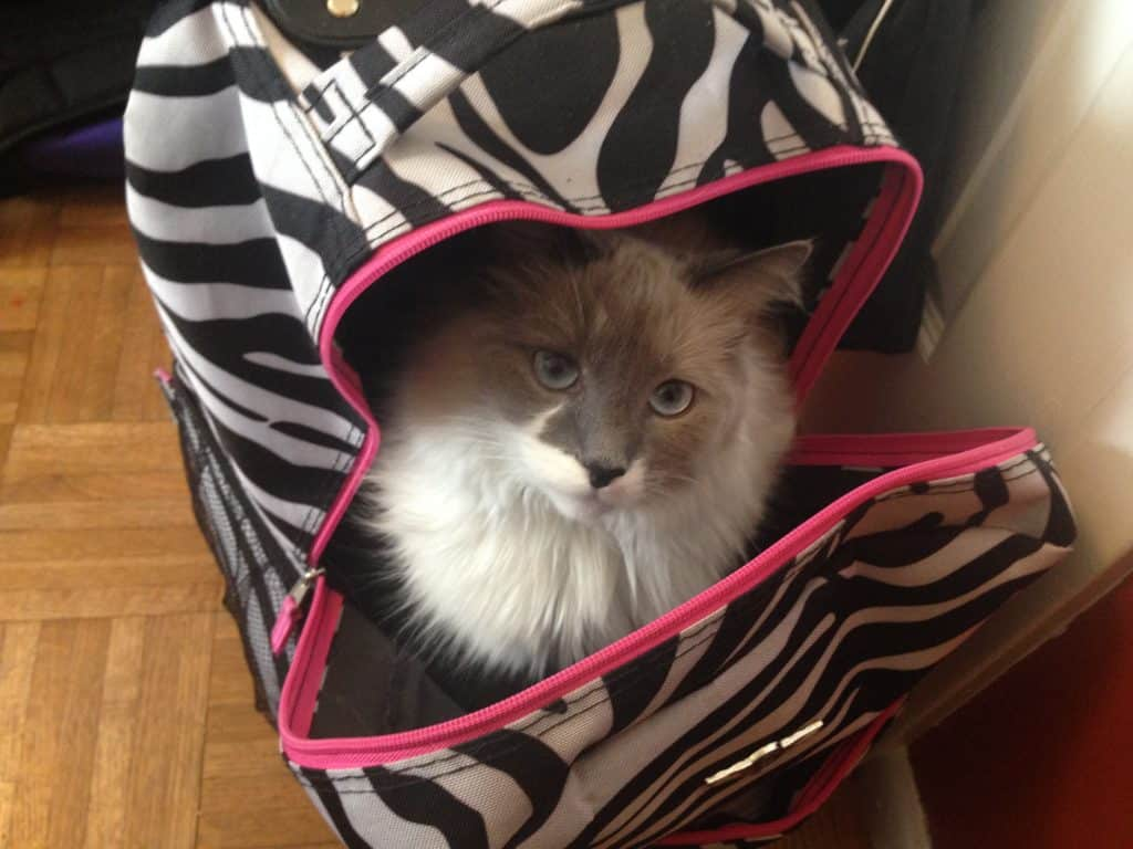 My adorable Yeti - sneaking into my computer bag.
