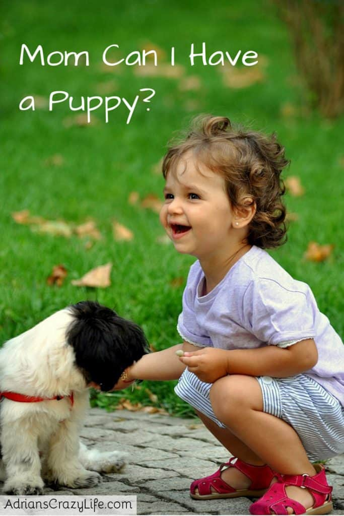 Mom, Can I Have A Puppy  Adrians Crazy Life-3648