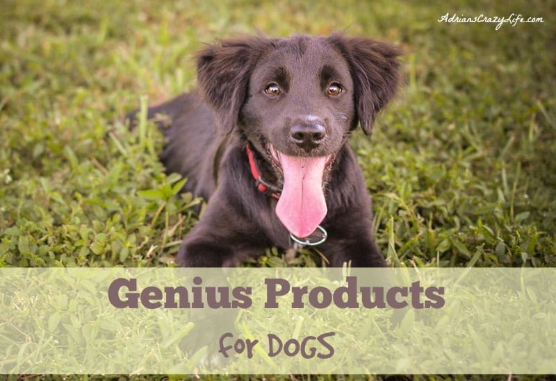 This is a collection of must-have items for people who really love their pets.