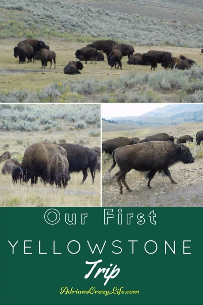 Our first trip to Yellowstone was fantastic. We had a great guide to show us all the great places to see.