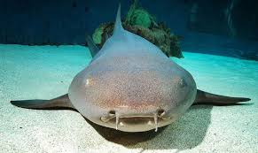 Cruise to Aruba - Feeding sharks