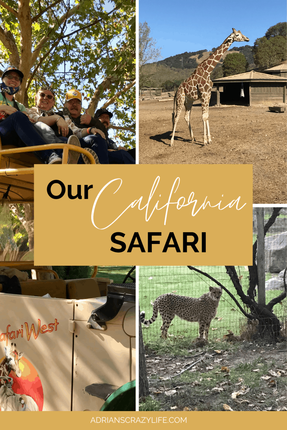 Our California Safari